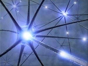 Neuronen - MS